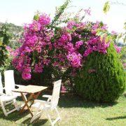 Magnolia Grcka Jonska Regija Sivota Letovanje Olimpturs